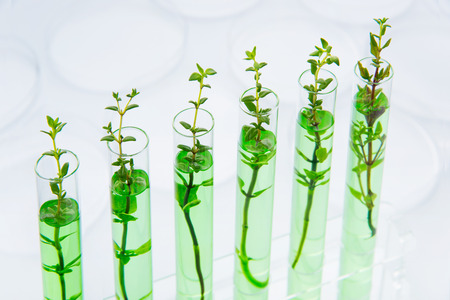 Genetically modified plants. Plant seedlings growing inside of test tubes photo