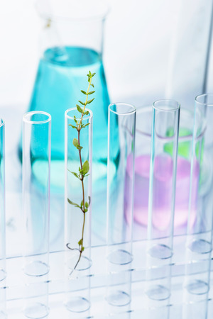 Genetically modified plant. Plant seedlings growing inside of test tube photo