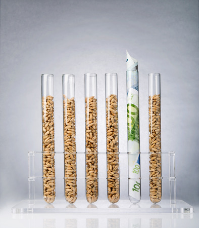 test tube holder: Genetically modified seeds inside of test tubes Stock Photo