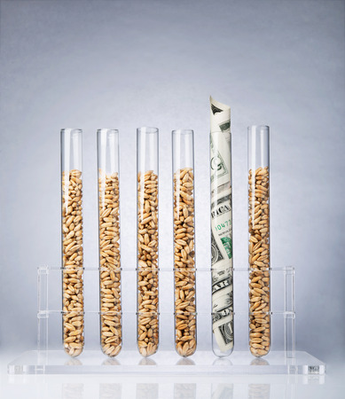 Genetically modified seeds inside of test tubes photo