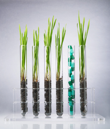 test tube holder: Pharmaceutical research. Herbal pills and medical plants in test tubes