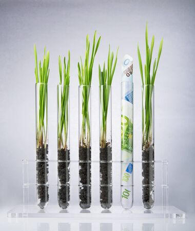 Genetically modified plants inside of test tubes photo