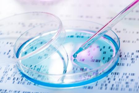 genetica: Campione di DNA di essere pipettato in capsula di Petri con gel DNA in background Archivio Fotografico
