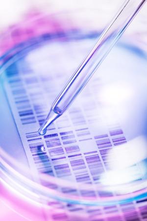 バック グラウンドで DNA ゲルのペトリ皿に内されている DNA のサンプル