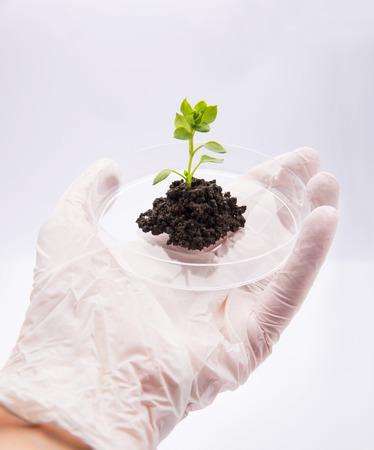 Hand offering seedling growing plant in petri dish Standard-Bild