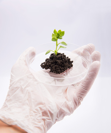 Hand offering seedling growing plant in petri dish photo