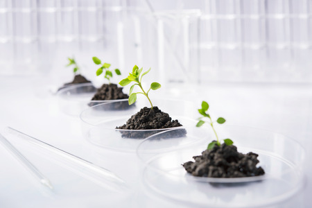 genetic research: Seedling growing in petri dish in laboratory