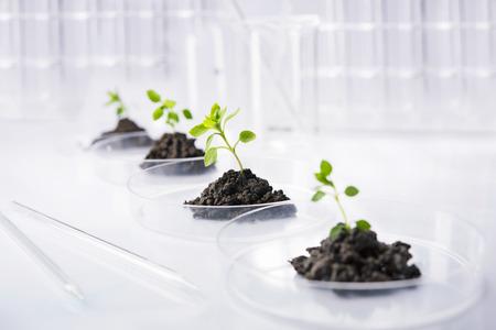 Seedling growing in petri dish in laboratory