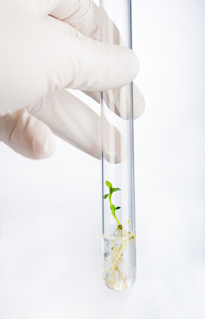 Hand holding test tube with seedling photo