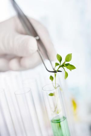 Biotechnology Research. Seedling growing in laboratory undergoing experiment photo