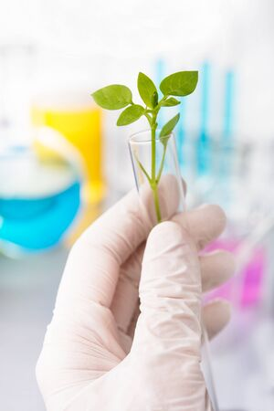 test tube holder: Scientist researching on plants in a laboratory
