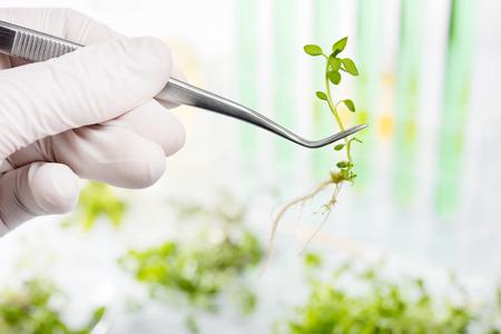 実験室で植物の研究の科学者