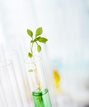 test tube holder: Biotechnology Research. Seedling growing in laboratory undergoing experiment
