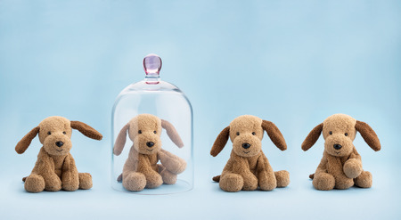 Puppy toy protected under a glass dome on blue background