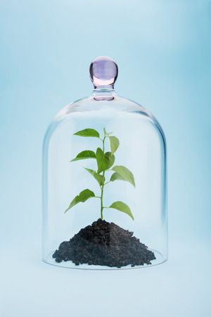 Small tree growing under a glass dome on blue background