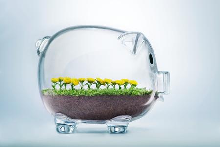 잔디와 투명 한 돼지 저금통 안에 성장하는 꽃 번영 개념