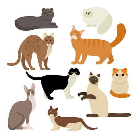 siamese: Funny characters are cats different breeds. Set of icons of cats in a flat style. vector illustration isolate on a white background.