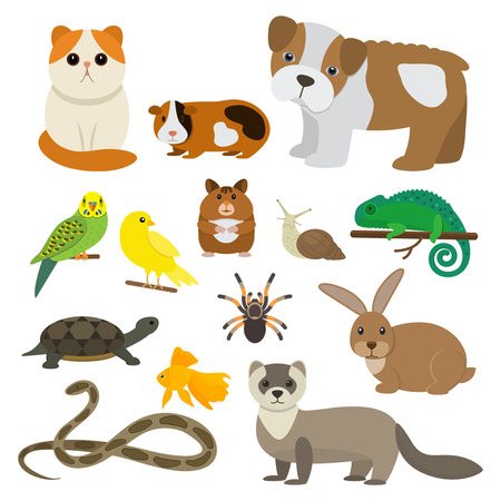 Vector collection of pets, rodents, insects, birds, reptiles, including dogs, cats, rabbits, turtles, a ferret, parrot, snake, guinea pig, a chameleon, a hamster, a tarantula and canaries.