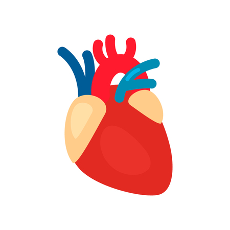 myocardium: Human heart anatomy. Heart medical science vector illustration. flat vector icon isolated Illustration