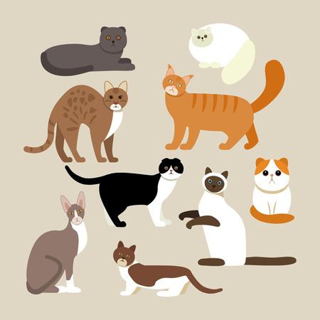 bobtail: Funny characters are cats different breeds. Set of icons of cats in a flat style. vector illustration isolate