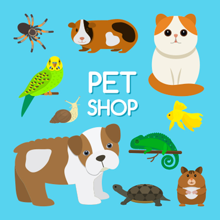guinea pig: A poster set of cute pets. The concept of zoo stores. Flat isolated vector illustration Illustration