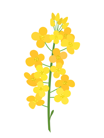 Flowering stalk of yellow rape flowers. Wild field grass. The concept of rapeseed oil or garden. black and white background