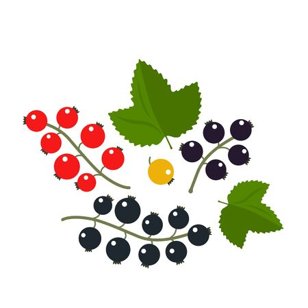 set of branches of black and red currants with leaves isolated on a white background. vector illustration