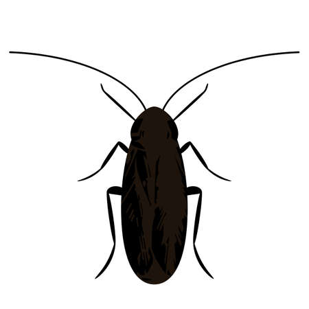 silhouette of a black cockroach. icon in flat style isolated on white background 矢量图像