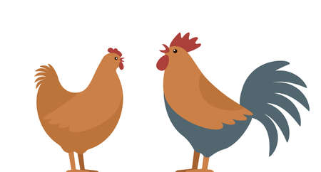 Set of domestic birds from the farm. Rooster and hen. template for the poultry farm. vector illustration isolated on white background