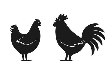 Set of domestic birds from the farm. Rooster and hen. template for the poultry farm. vector  illustration isolated on white background 向量圖像
