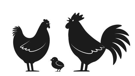 Set of domestic birds from the farm. Rooster, chicken and hen. template for the poultry farm. vector illustration isolated on white background Illusztráció
