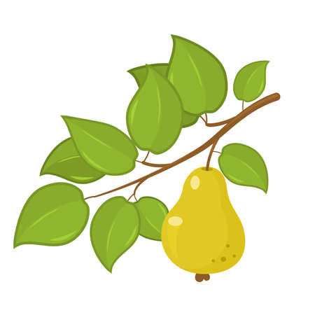 ripe green pear hanging on a tree branch with leaves. vector illustration isolated on white background