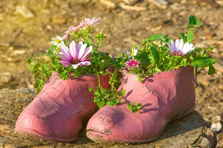 chock: Old painted cracked rubber shoes as a flower pot on wooden chock. Warm sunny day