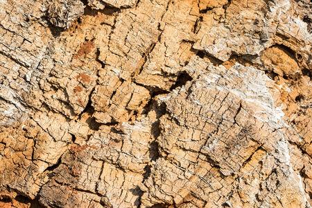 duramen: Textura natural. Madera vieja del �rbol talado. Duramen seco Foto de archivo