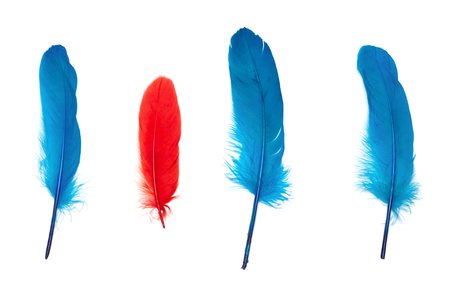 Small red feather surrounded by blue ones. Not like everyone else concept Stock Photo