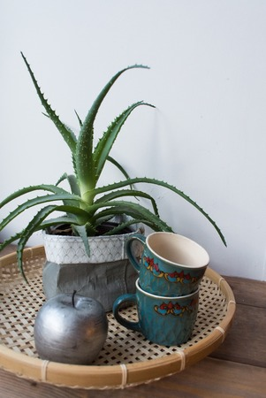 Aloe cactus, cups and silver apple. vintage stile