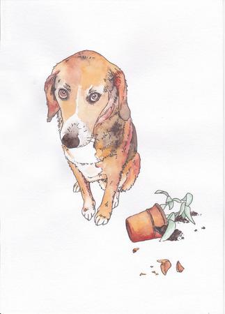 perro asustado: perro culpable ?? cerca de la maceta rota en el fondo blanco