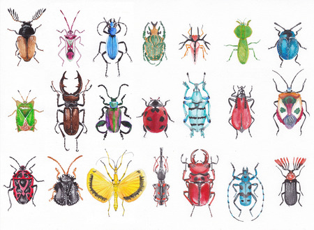 stag beetle: Many beetles on a white background executed with watercolors.