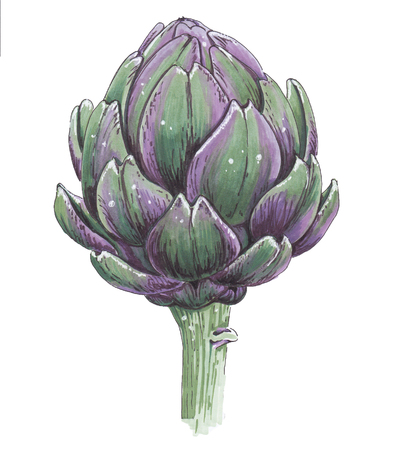 Artichoke on a white background. Sketch.