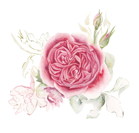 The English rose. The flower is watercolor.