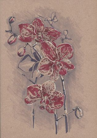 Phalaenopsis orchid. Sketch markers on kraft paper.