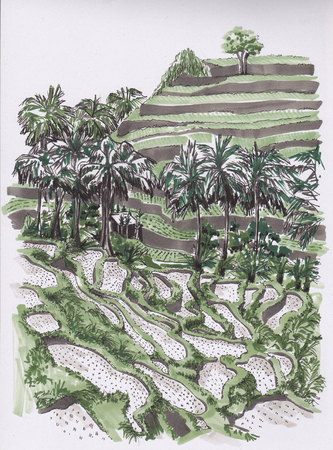 Palms and rice fields. Sketch the markers.