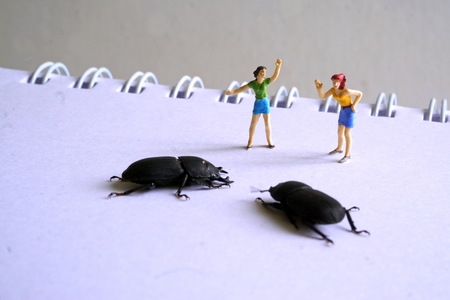 Miniature figures of young women on a Notepad looking at huge insects. The concept of the exhibition of exotic insects, terrariums.