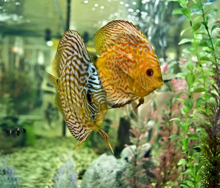 the very beautiful fish in the aquarium photo