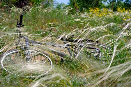 bicycle lying  n the grass in a meadow photo