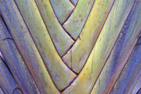 Close up of palm leaves and trunk photo