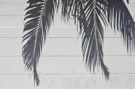 白セメント壁ヤシの木からの陰で
