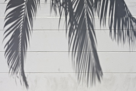 nearness: White cement wall with a shade from palm trees