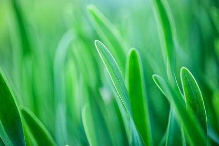 light green: The beautiful spring flowers background. Nature bokeh