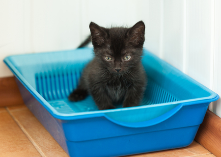 The black kitten goes to the toilet in the tray